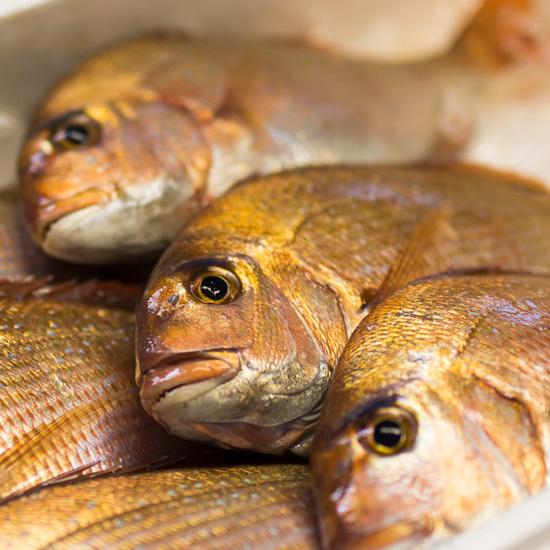 お届けする鳥取の鮮魚 真鯛